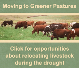 Moving to Greener Pastures - Click for opportunities to relocate livestock during the drought.
